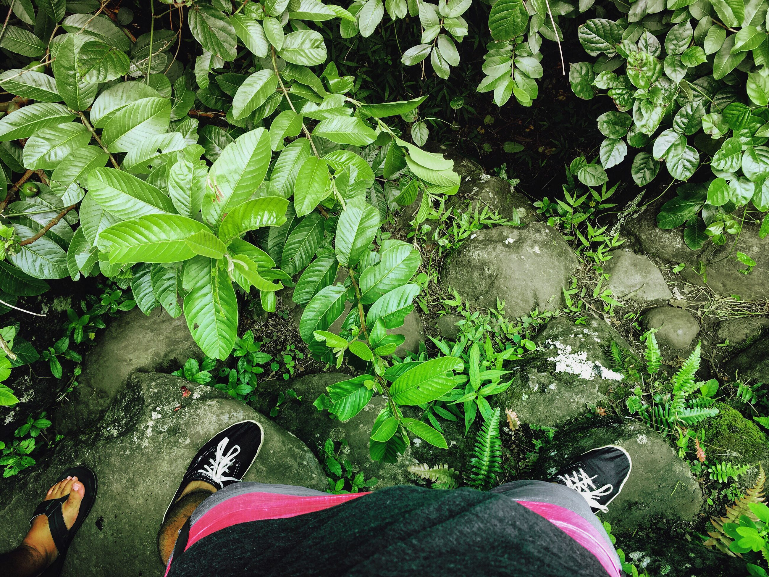 low section, shoe, plant, person, leaf, personal perspective, standing, green color, human foot, growth, footwear, high angle view, green, canvas shoe, day, nature, outdoors, tranquility, garden, fragility, pink color