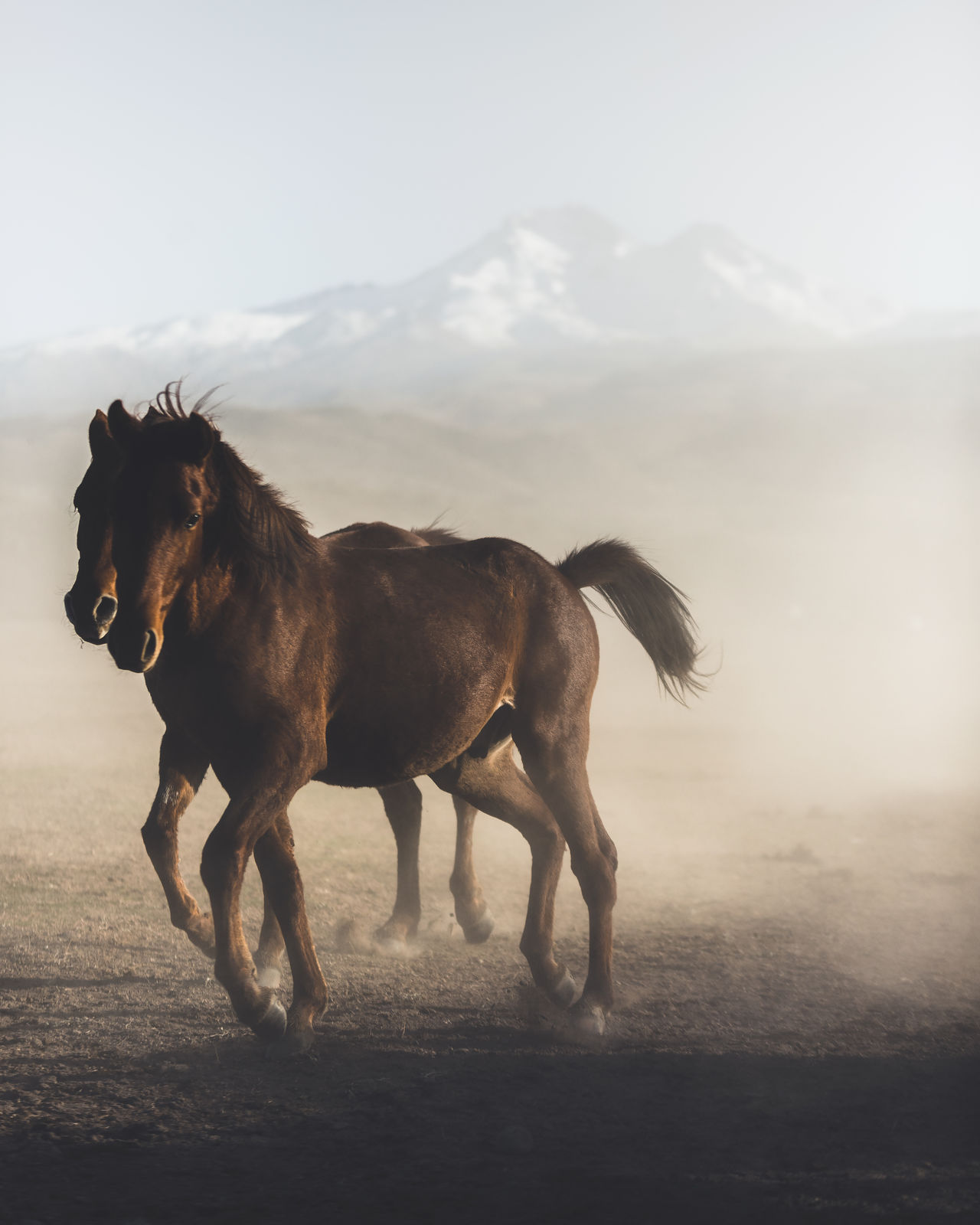 Horses running on landscape against sky