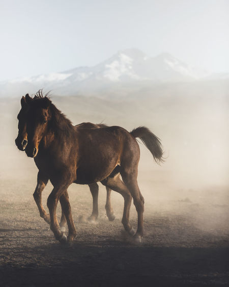 Horses make a landscape look beautiful Mammal Domestic Domestic Animals Animal Themes Pets Animal One Animal Vertebrate Horse Sky Land Livestock Running Fog Nature Animal Wildlife Mountain Field Environment No People Herbivorous Dust The Week On EyeEm Editor's Picks