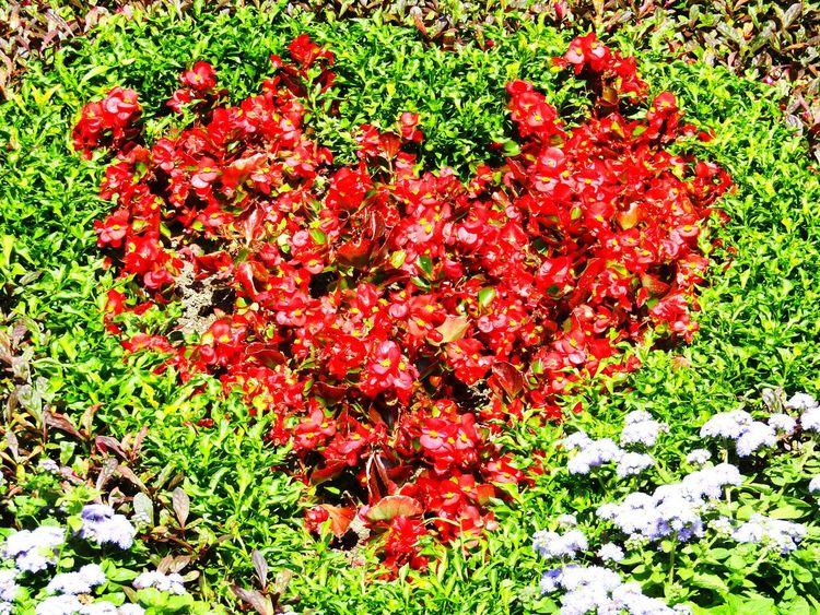 Heart Hearts♡hearts Heartshape Flower Flowerphotography Beautifulflower  Beautifulnature Fine Art Photography Taking Photos Colour Of Life Gradinabotanica Botanicalgarden Garden Photography Eyeemnature Romania Naturephotography Redheart Eyeemcollection Eyeemnaturelover Gardenphotography NatureIsBeautiful Todayphotography Park Parkphotography