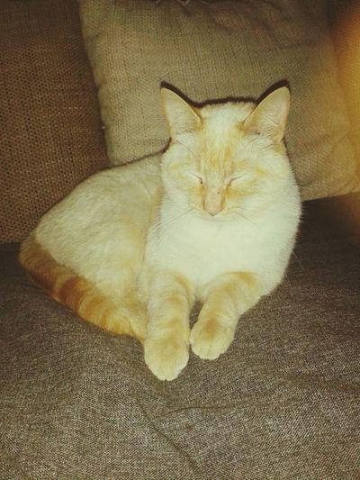 C'est mon chat Loulou