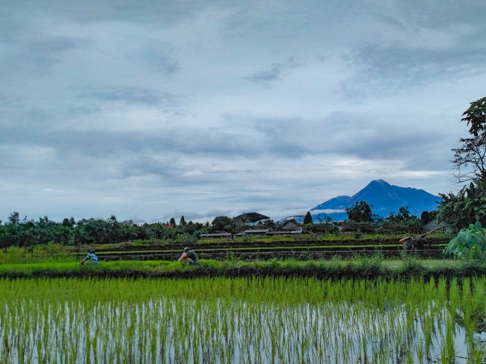 My Year My View Betaphotographer📷 Nature_collection Nature Photography Nature Is Art Beautiful View Beauty In Nature Photooftheday Photographer Photographyeveryday INDONESIA Indonesia_allshots Indonesia_photography Indonesia_allshot Likeforlike Likeforfollow Handmade For You