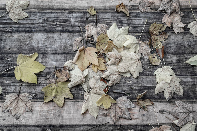 High Angle View Of Dry Leaves On Wood