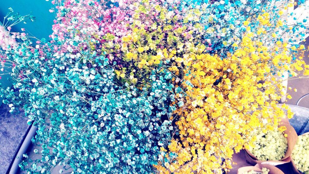 안개꽃 Flowers Spring Flowers Hongdae