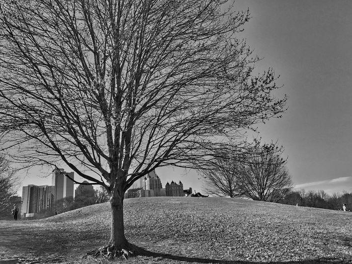 Blackandwhite Urban Landscape Outdoors