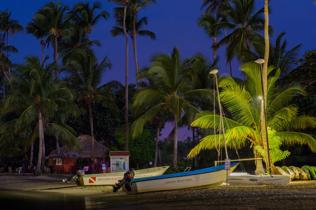 The Caribbean Tree Palm Tree Palm Trees Holiday Boats Sand Paradise Palm Tree Night Water Nature Outdoors Beach Beauty In Nature Sky