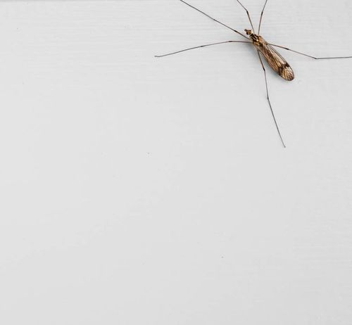 Insects  Minimalism Monochrome Supernormal