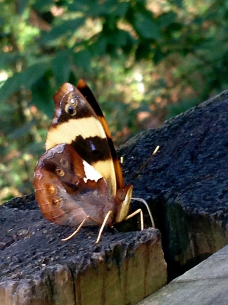 animal themes, animals in the wild, one animal, insect, wildlife, animal wildlife, outdoors, close-up, day, no people, nature, butterfly - insect, perching, beauty in nature, fragility