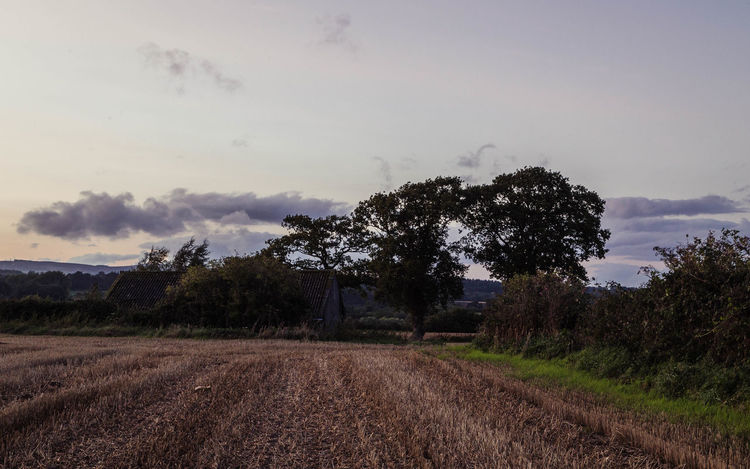 Evening walks... Tree Trees Agriculture Beauty In Nature Cleobury Mortimer Cloud - Sky Day Evening Sky Field Growth Landscape Line Of Trees Nature No People Outdoors Plough Rural Scene Scenics Shropshire Shropshire Countryside Shropshire Landscape Sky Tranquil Scene Tranquility Tree