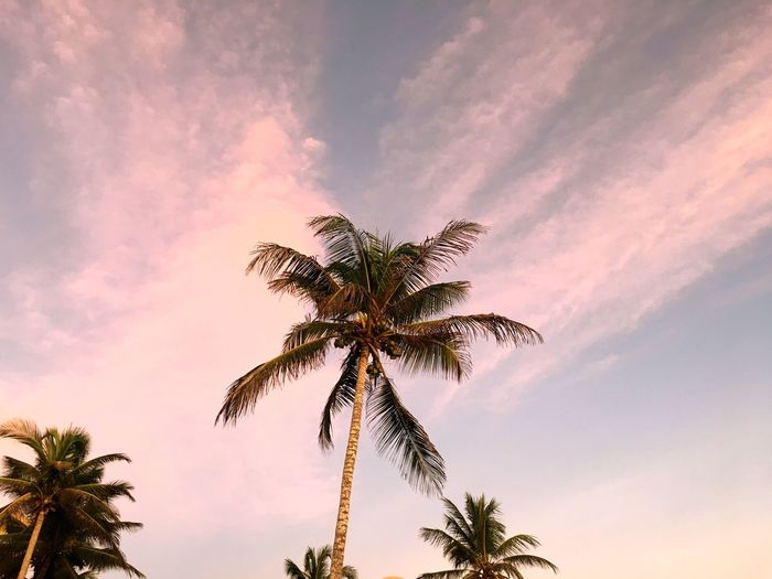Low angle view of silhouette palm tree against romantic sky