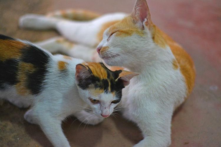 Close-up of cats