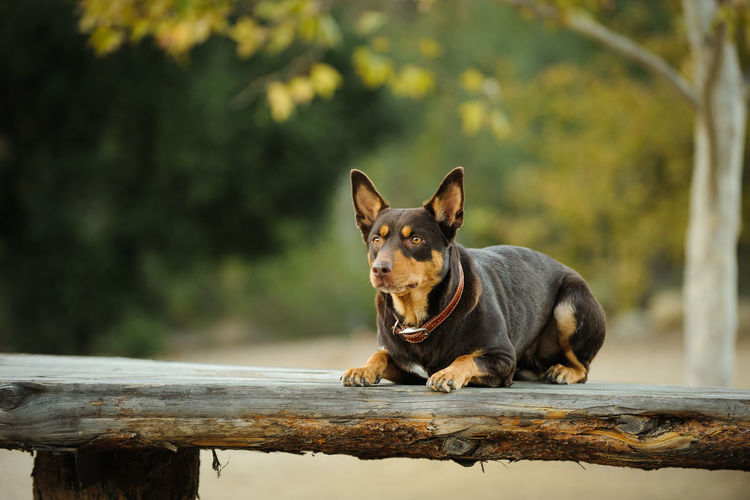 Close-up of dog on bench