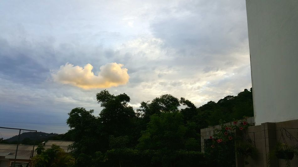 Nature Photography Gardenflowers Clouds And Sky First Firstpicture First Eyeem Photo