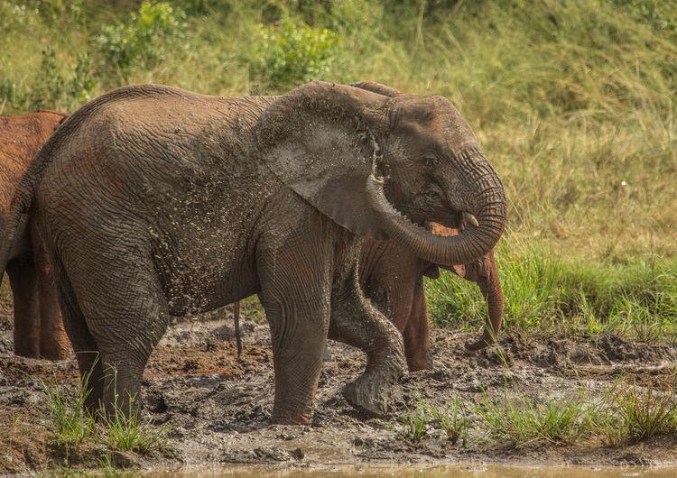 Side view of elephant on field
