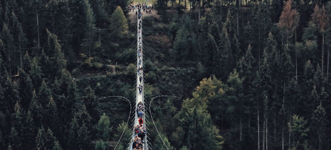 Panoramic Shot Of People Standing On Footbridge In Forest