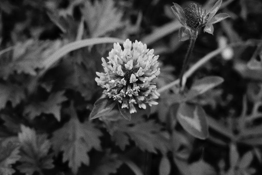 EyeEm Selects Plant Flower Flowering Plant Fragility Vulnerability  Growth