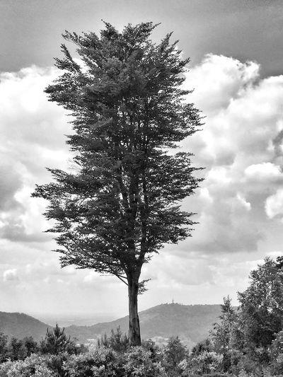 Ein Baum in der Landschaft EyeEm Nature Lover EyeEm Deutschland EyeEm Best Shots - Black + White Tadaa Community Landscape_Collection Black Forest