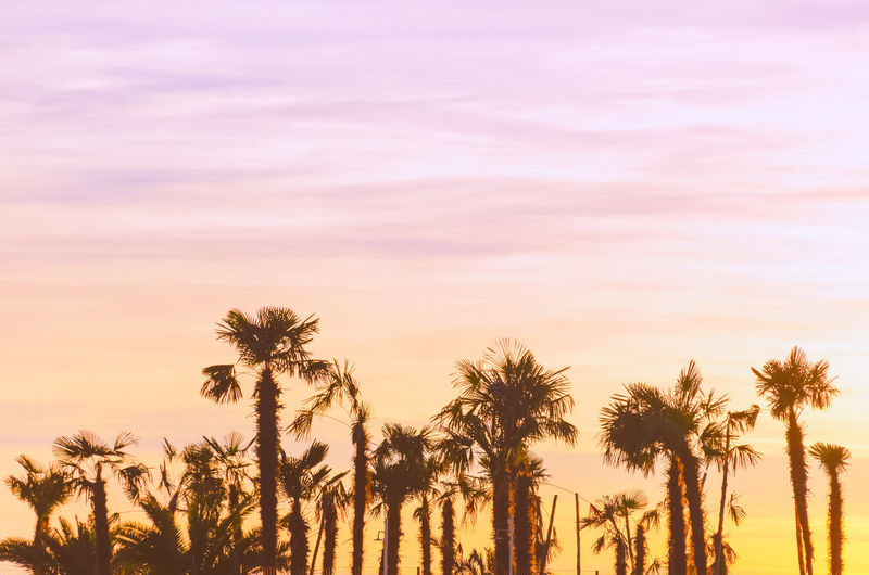 Silhouette of the palm trees at sunset with vintage filter. photo with soft focus.
