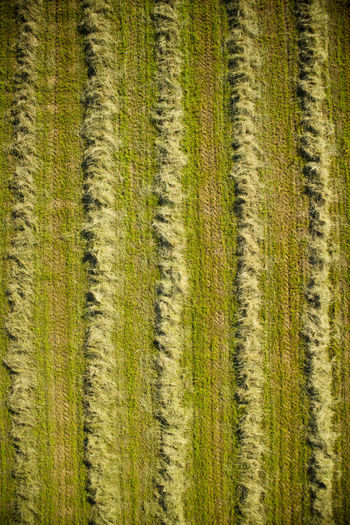 Dry Drone  Top View Field Straw Hay Dry Grass Landscape Background Natural Rural Summer Agriculture Meadow Land Agriculture Season  Outdoors Feed