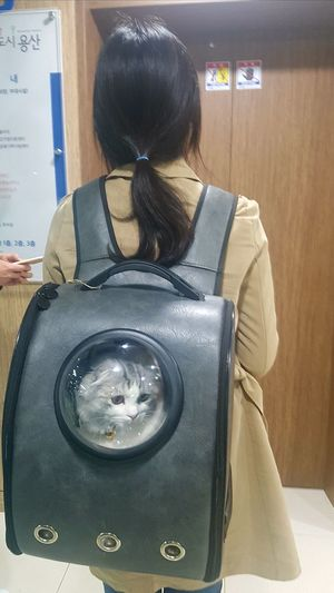 Cat in the bag Bag Cat One Woman Only Only Women One Person Adult Indoors  Rear View Adults Only People