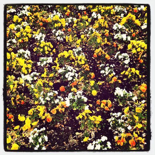 Full frame of yellow flowers