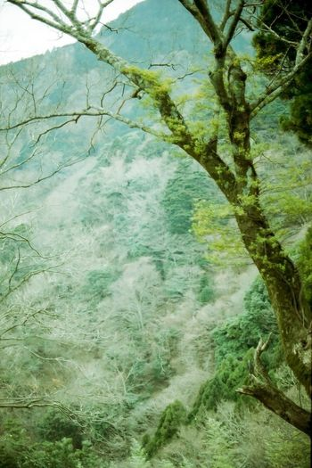Tree Growth Nature Branch Beauty In Nature No People Water Day Green Color Tranquility Tree Trunk Outdoors Scenics Full Frame Film Photography Filmcamera Film135 Nikon EyeEmNewHere Nikonf2 大山