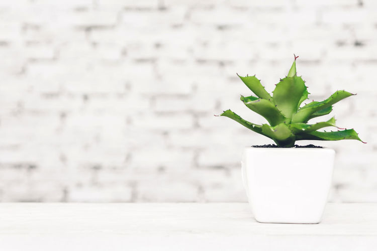 Interior style home decor with tree on table with white brick wall background Beauty In Nature Close-up Copy Space Day Focus On Foreground Freshness Green Color Growth Houseplant Indoors  Leaf Nature No People Plant Plant Part Potted Plant Small Succulent Plant Table Wall - Building Feature White Color