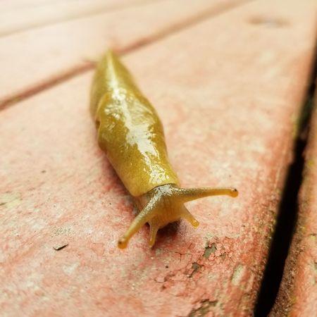 Nature Green Outdoors Sunny Day Slug Creature Sticky Slimy Pnwlife