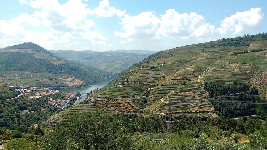 Agriculture Alto Duoro Blue Sky Crop  Cultivated Land Duoro Valley Field Grapes Hillside Landscape Mountain Pinhão Port Wine Production Quinta River River Duoro Rural Scene Terraced Field Terraces Town Tranquil Scene Vine Vineyard