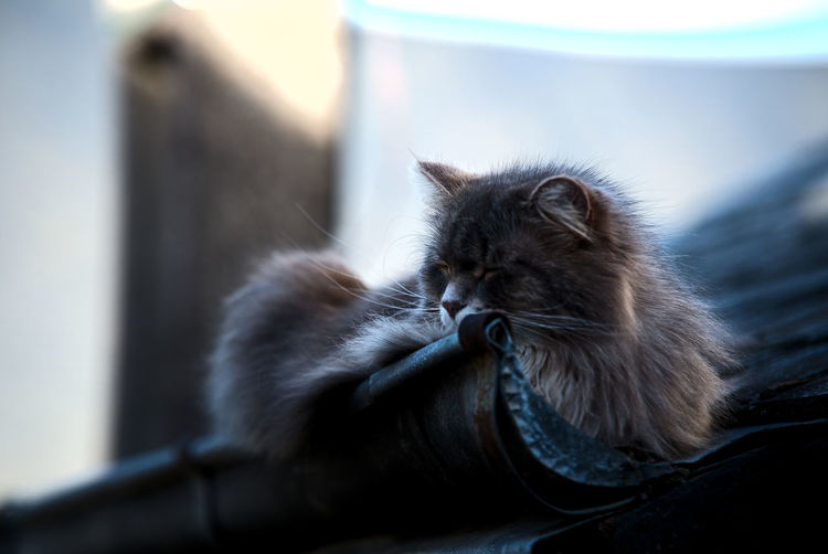 Close-Up Of Cat Sitting Outdoors