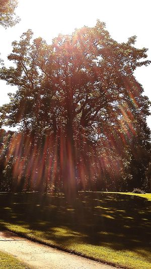 Old Tree Oak Tree Monet-esque Tree Branches Sunny Day Shadows & Lights Beautiful Aura The Soul Of The Trees Prismatic Effect Rainbow Colors