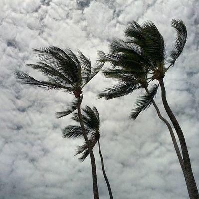 E o vento no mundo...