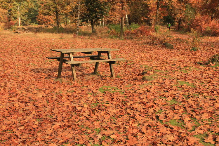 Empty Bench In Autumn Leaf Covered Park