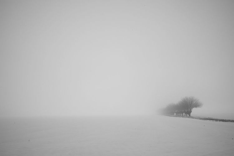 Black & White Foggy Weather Nature Photography Snow ❄ Tree And Sky Bare Tree Beauty In Nature Cold Temperature Day Fog Landscape Nature No People Outdoors Scenics Sky Snow Snowing Tranquil Scene Tranquility Weather Winter
