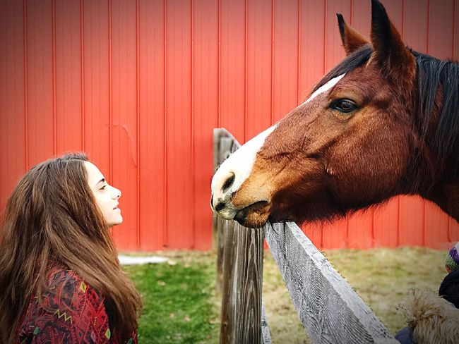 Horse Domestic Animals Animal Themes One Animal One Person Day Side View Outdoors Mammal Barn Girl