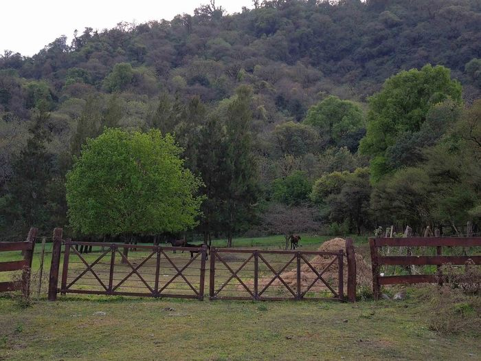Landscape near to Yerba Buena, Tucumán, Argentina. 2016/09/15. Beauty In Nature Bridge Bridge - Man Made Structure Day Forest Green Green Color Growth Landscape Lush Foliage Mountain Nature No People Non-urban Scene Outdoors Railing Remote Scenics Solitude Tranquil Scene Tranquility Tree WoodLand