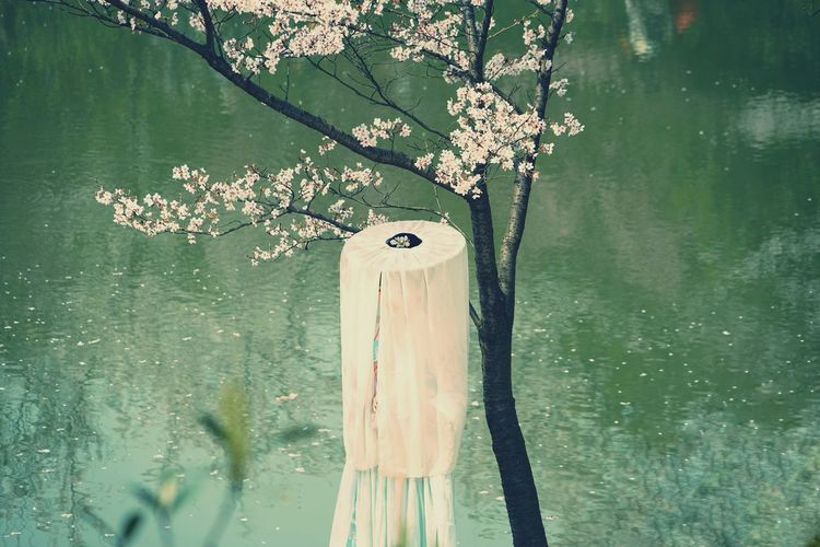 China Photos China Beauty Model Girl Model Shoot Chinese Girl Spring Time Cherry Blossoms People Watching Urban Spring Fever Taking Photos Taking Photos Of People Taking Photos Happening In The Park Streamzoofamily The Portraitist - The 2016 EyeEm Awards