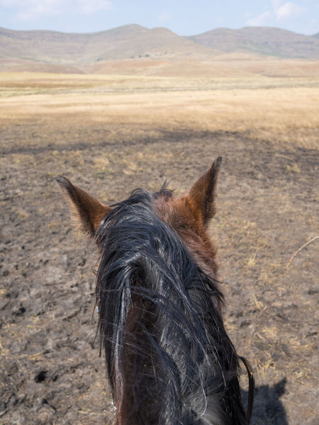 POV Point Of View Lesotho Horse Horse Riding Nature Basuto Africa African Landscape Scenery Mountain Mountain Range