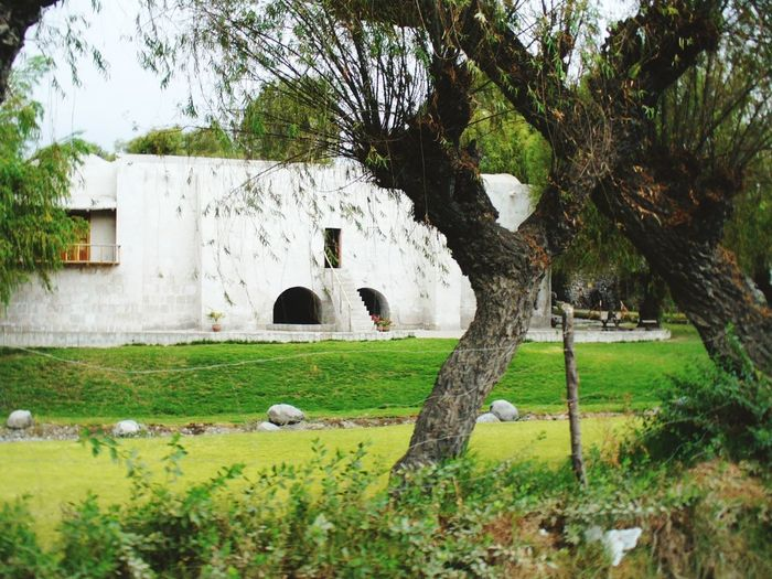 Hacienda en arequipa Built Structure Tree Architecture Religion Grass No People History Memorial Day Outdoors Building Exterior Nature Sky Connected By Travel