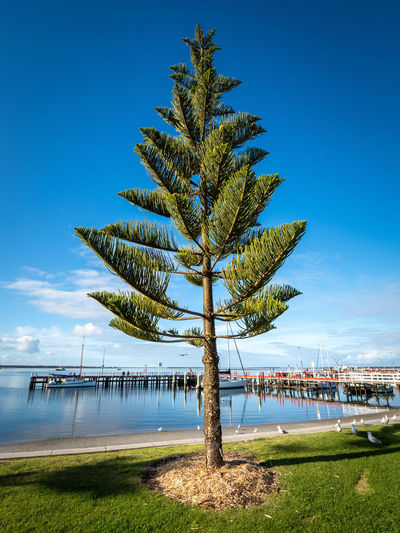 Palm tree by sea against blue sky