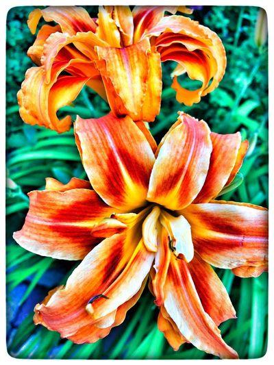 Flower Flowering Plant Freshness Vulnerability  Fragility Plant Flower Head