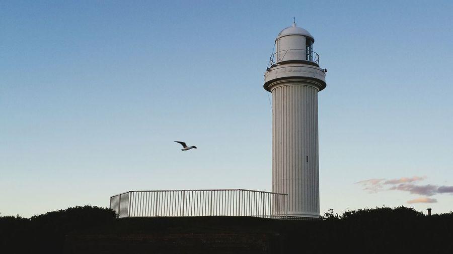 燈塔與海鷗 lighthouse & seagull First Eyeem Photo
