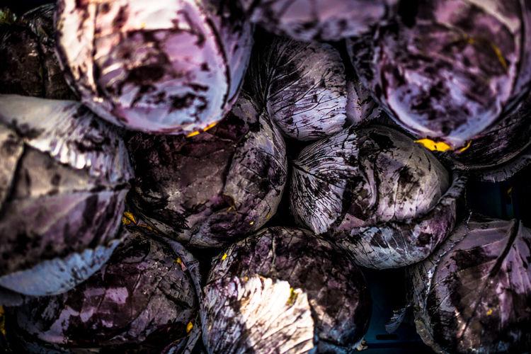 Full frame shot of cabbages
