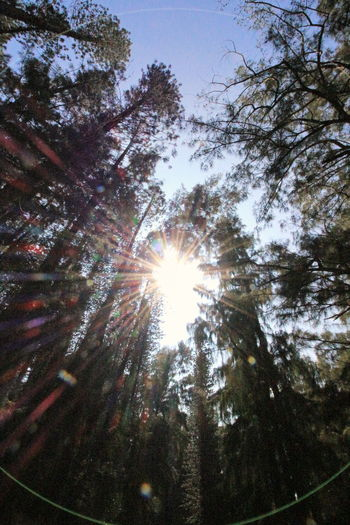 Cascade Of Light Forest Growth Hawaii State Park Lens Flare Nature Starlight Sun State Parks Sunlight Through Trees Tree Tree Trunk Trees