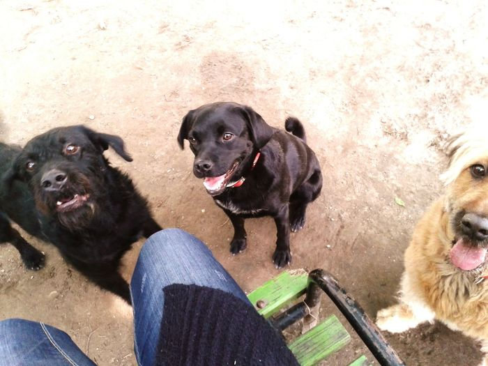 Bagira Luna Molly Bestfriends Fekamegakaramella Bestfriend Doggy Love
