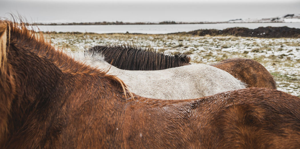 Close-up of a horse on land