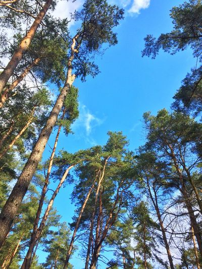 Forest Tree Trees Sky Nature Outdoors Park Beauty In Nature Sky And Clouds Sky Day