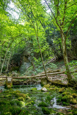 Beauty In Nature Day Flowing Flowing Water Foliage Forest Green Color Growth Land Lush Foliage Nature No People Non-urban Scene Outdoors Plant Rainforest Scenics - Nature Solid Stream - Flowing Water Tranquil Scene Tranquility Tree Water WoodLand
