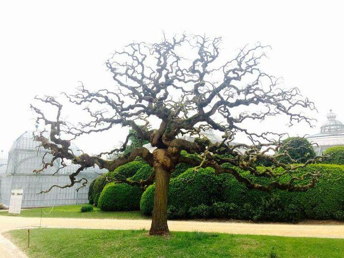Amazed Royalgardens Nature TreePorn WOW Great Day 😀😀👌👌 Aroundtheworld