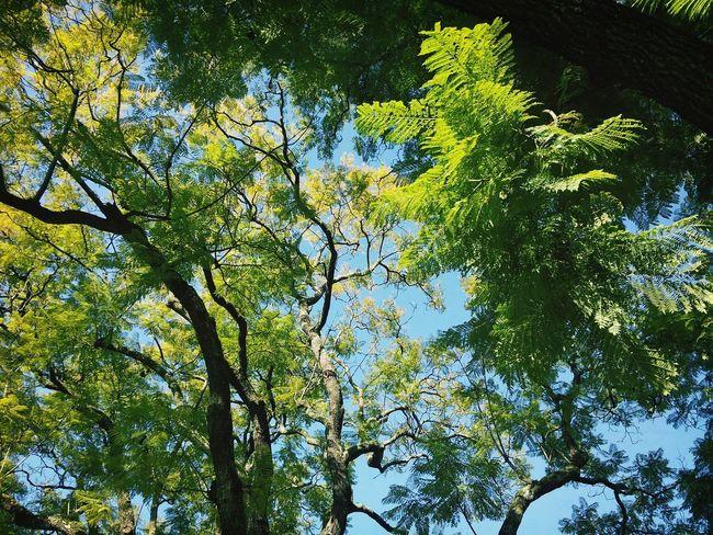 Walking Around Hugging A Tree Enjoying The Sun Trees
